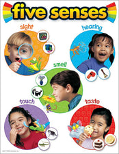 Five Senses Learning Chart