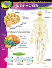 The Human Body–Nervous System Learning Chart