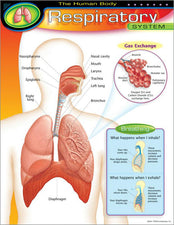 The Human Body–Respiratory System Learning Chart