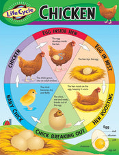 Life Cycle of a Chicken Learning Chart