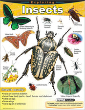 Exploring Insects Learning Chart