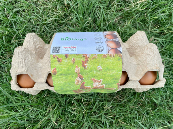 Free Range and Pasture Raised Eggs (10 pcs.)