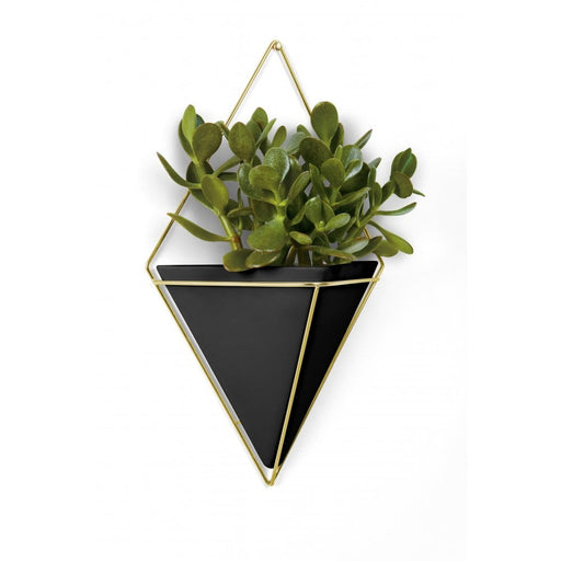 Trigg Large Wall Vessel, Black/Brass
