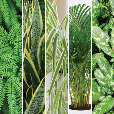 5 Indoor Plants That Are Good For Your Skin