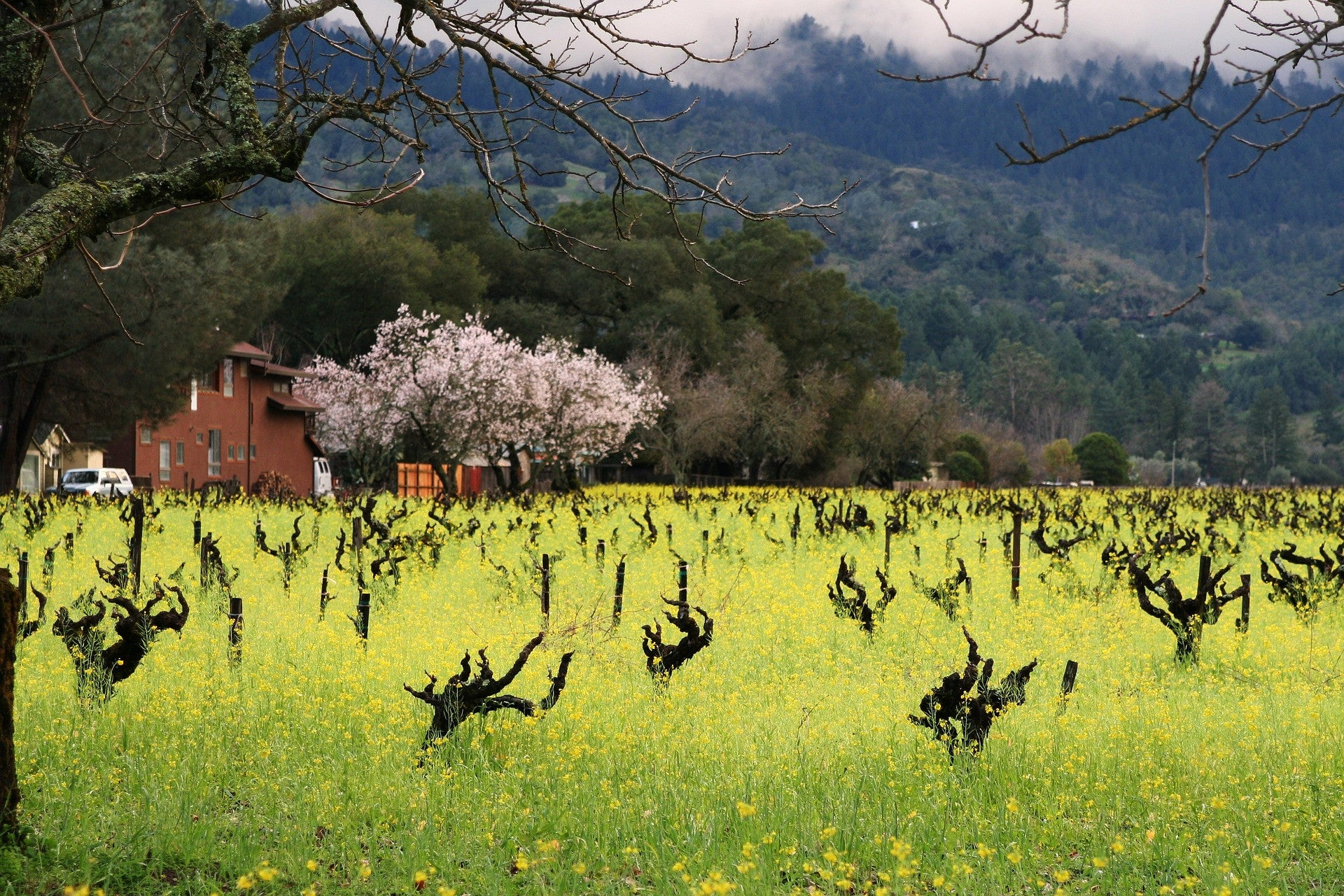 Winter in Wine Country:  It Cuts the Mustard