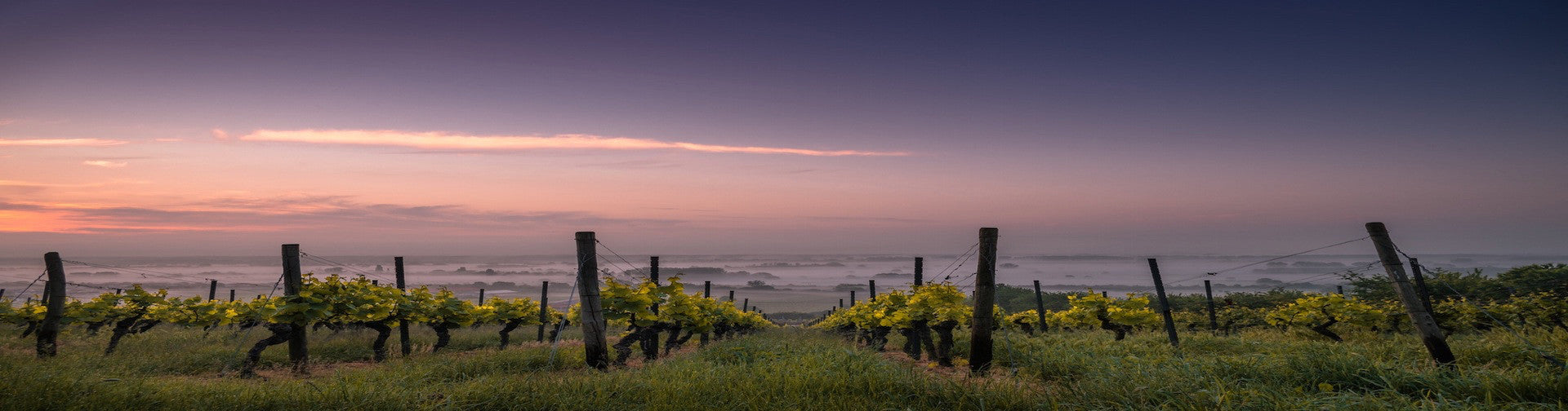 The True Sonoma Coast:  Extraordinary Pinot Noir