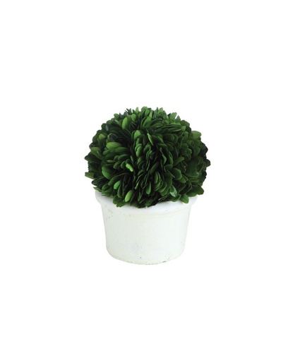 "4"" PRESERVED BOXWOOD TOPIARY HALF BALL IN POT, Creative Co-Op - A. Dodson's"