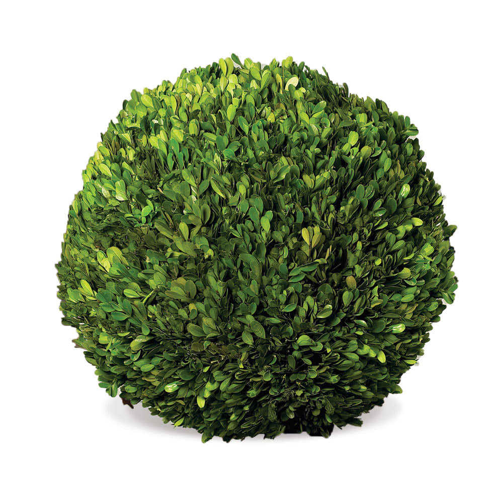 BOXWOOD TOPIARIES IN POTS, SET OF 8