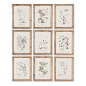FRUIT BEARING BRANCH ILLUSTRATIONS, SET OF 6