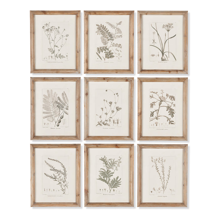 BOTANICAL ILLUSTRATIONS, SET OF 9