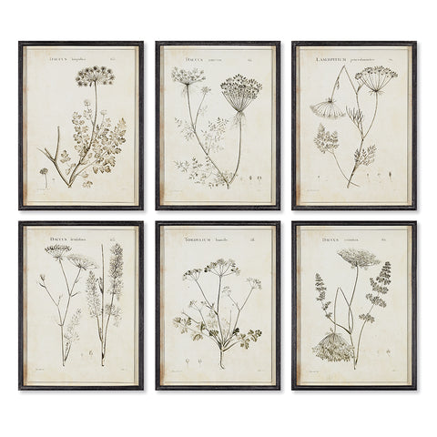 BULB STUDY SHADOW BOX PRINTS, SET OF 6