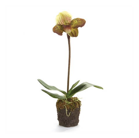 "20"" LADY SLIPPERS DROP-IN PLANT"