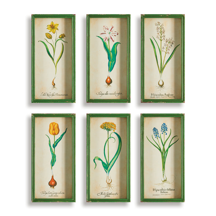 BULB STUDY SHADOW BOX PRINTS SET OF 6