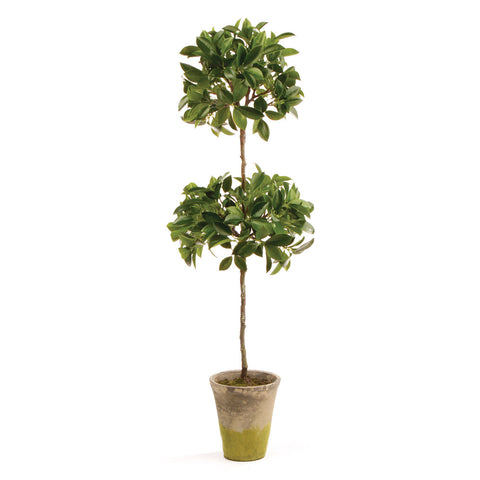FICUS TOPIARY IN POT 31""