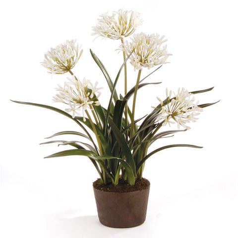 AGAPANTHUS DROP-IN 29""