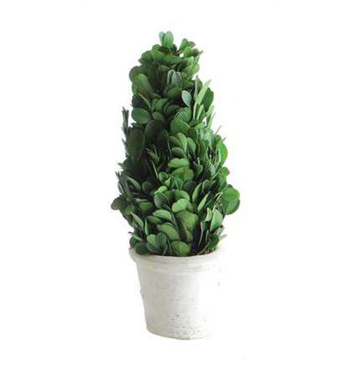 PRESERVED BOXWOOD CONE SHAPED TOPIARY IN CLAY POT