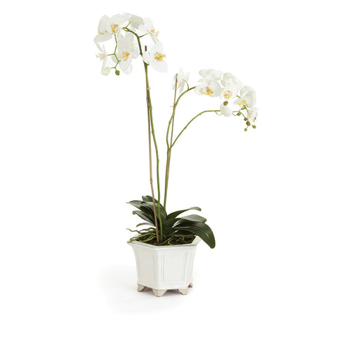 BARCLAY BUTERA PHALAENOPSIS IN CERAMIC POT 36""