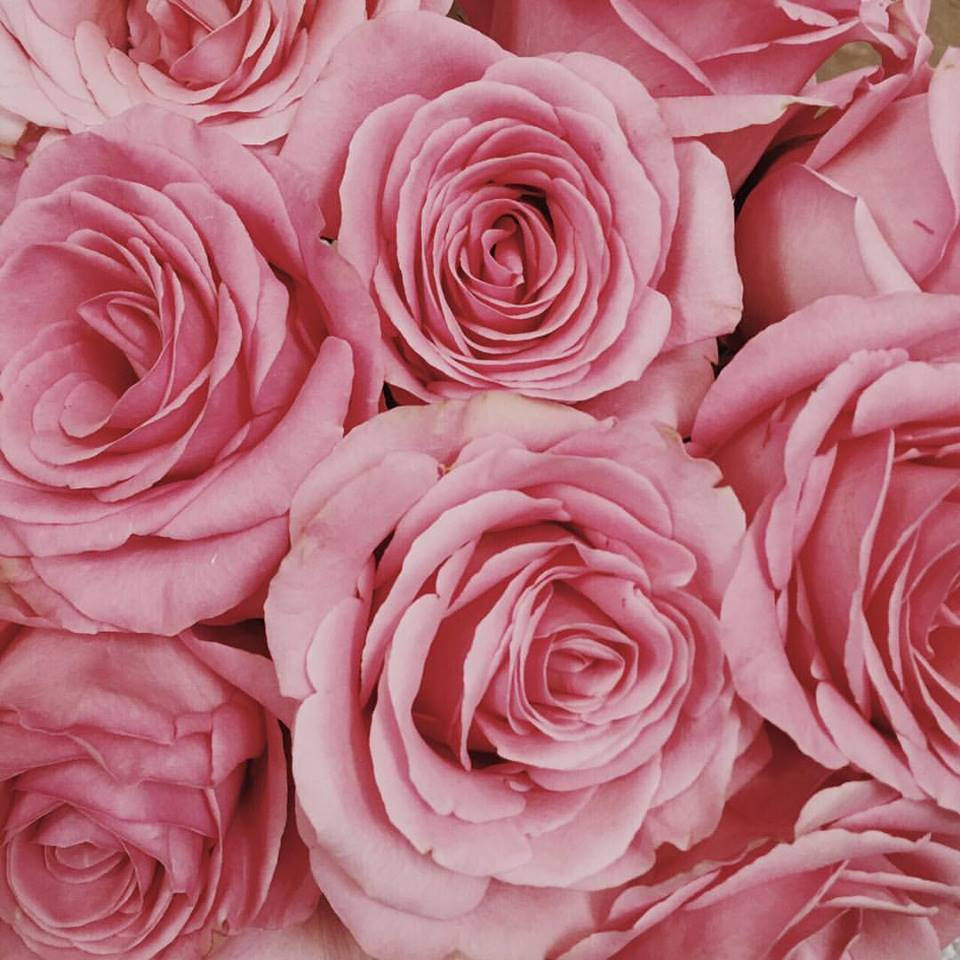 The prettiest pink roses for your wednesday lfrank the prettiest pink roses for your wednesday mightylinksfo