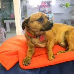 adoptable - dog - with - pet - blanket