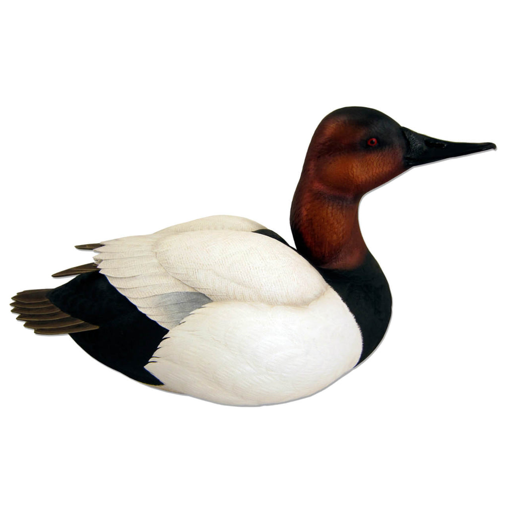 Life-Size Canvasback Drake Waterfowl Sculpture
