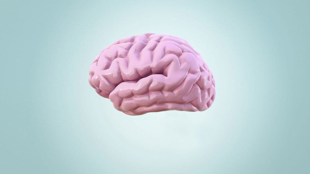 digital illustration of a brain pink on a bluish background