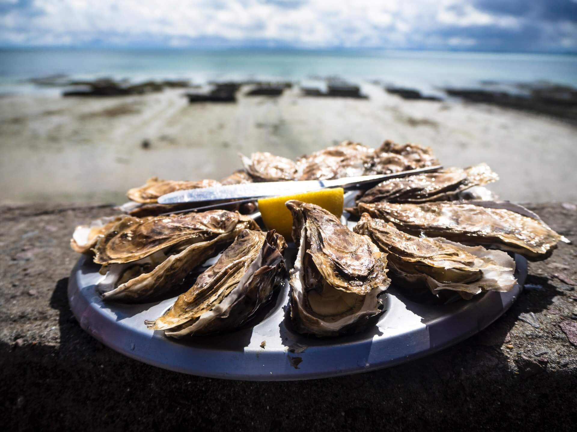 cooked oysters arranged in a circle on a plate placed near the beach