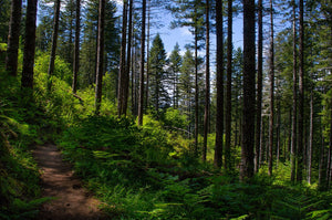 Trails Galore at Gales Creek Campground in Tillamook National Forest