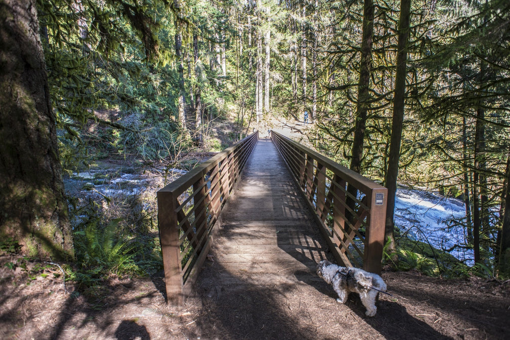 McEnry Bridge at Lacamas Creek in Camas Hiking