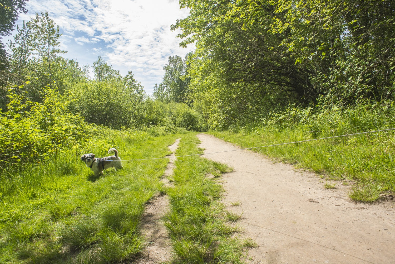 dog friendly hiking on sauvie island