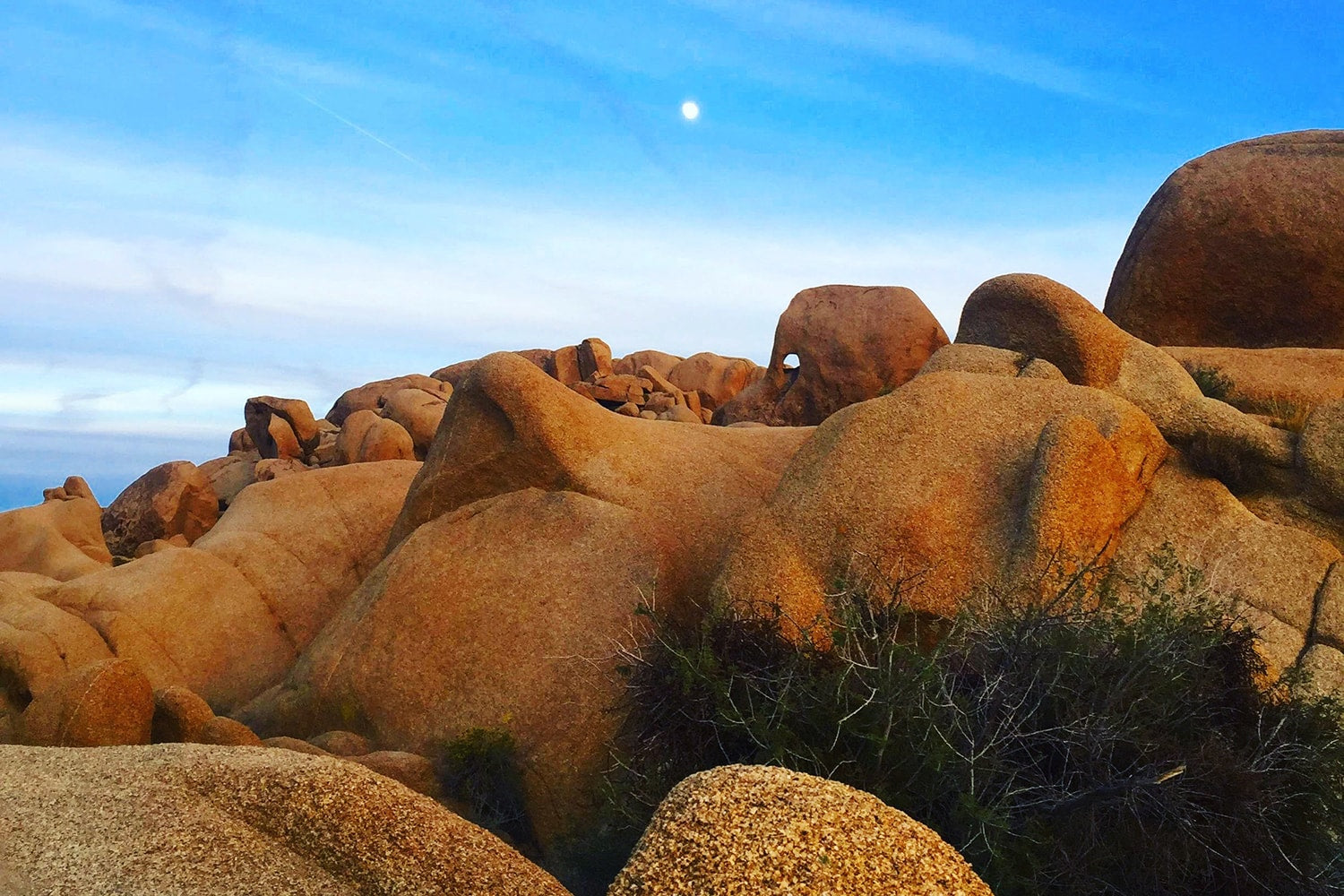 what to do at Joshua Tree National Park