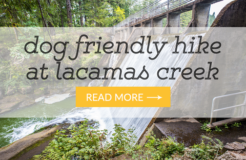 Hiking with dogs at Lacamas Creek Trail