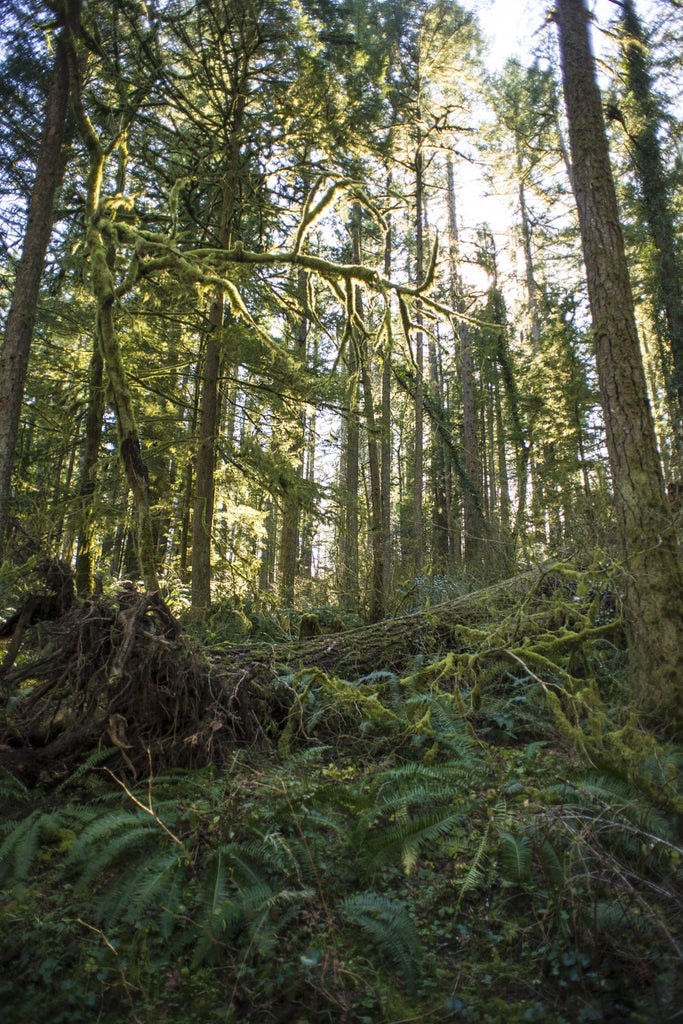 hiking in camas washington at lacamas creek trail