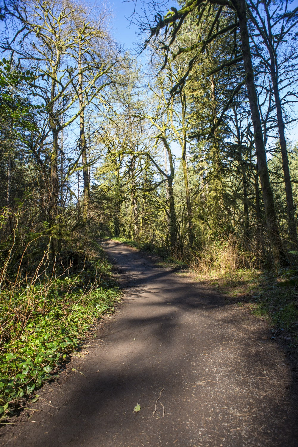 lacamas creek trail in camas washington hiking