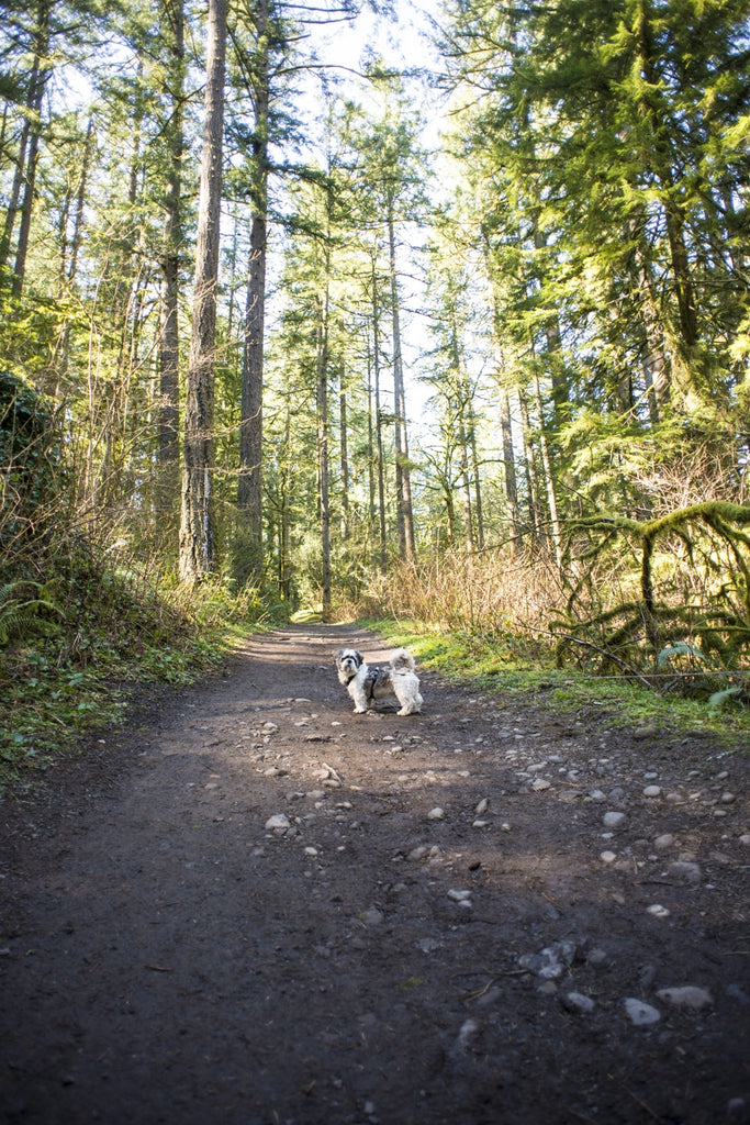 dog friendly hiking in camas washington