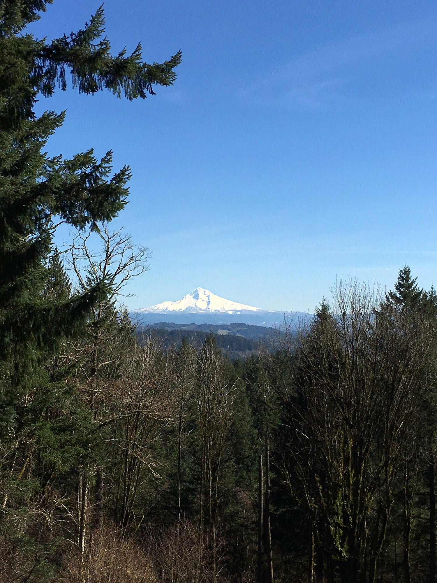 view of mount hood from scouter's mountain
