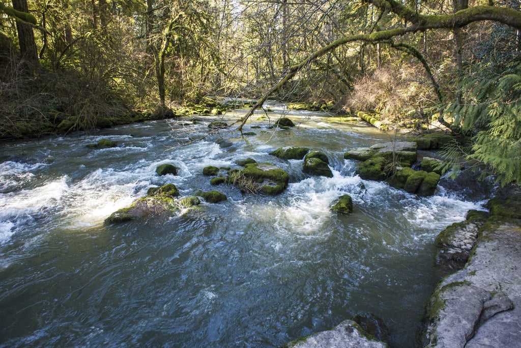 Lacamas Creek Trail