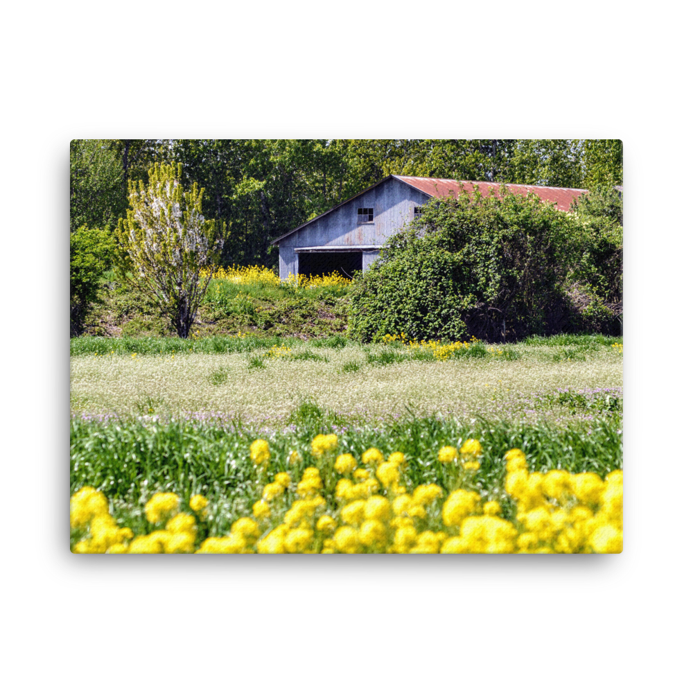 Frenchman's Bar Wildflowers - Gallery Canvas
