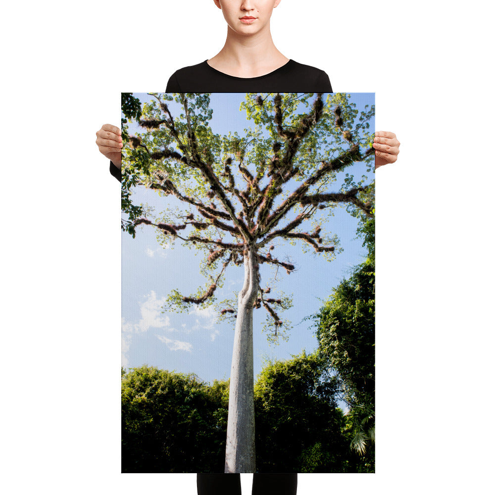 Tree of Life - Gallery Canvas