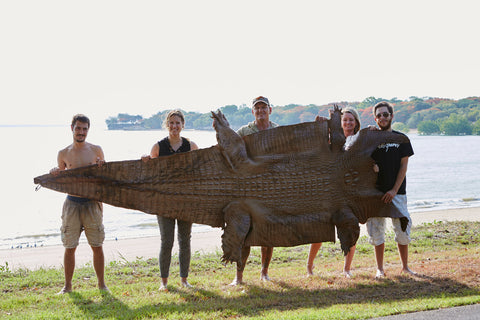 Monster Wild-Caught Crocodile Hornback Skin