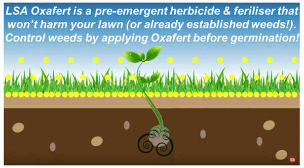 Lawn Solutions Oxafert Herbicide & Fertiliser 3kg - how it works - buy online