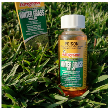 Amgrow Chemspray Weed Control Winter Grass Killer 100ml Packet & Bottle on Sir Walter DNA Certified Grass