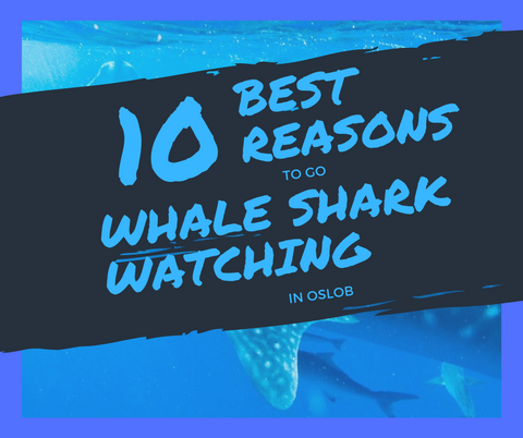 10 reasons to swim with whale sharks in oslob