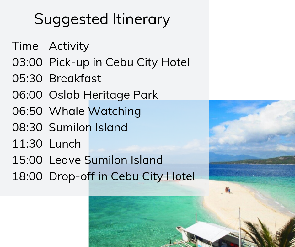 Whale shark watching and Sumilon Island tour itinerary