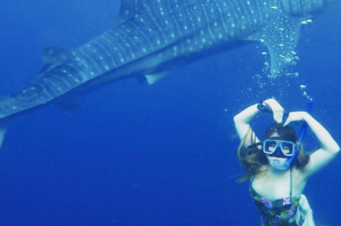 A whale shark swimming behind a tourist in Oslob.