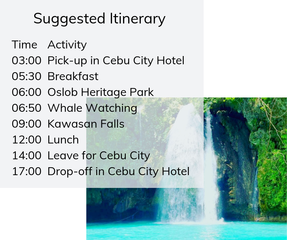 Whale watching tour with kawasan falls itinerary
