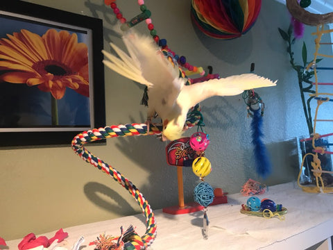 Bird playing on toy rope