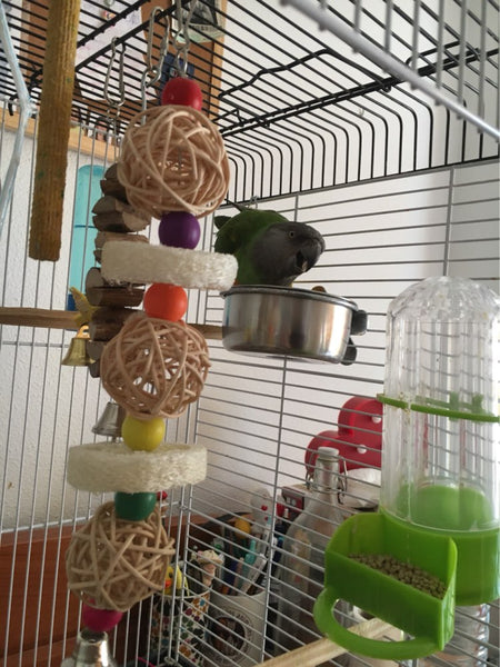 bird sponge toy on display in cage