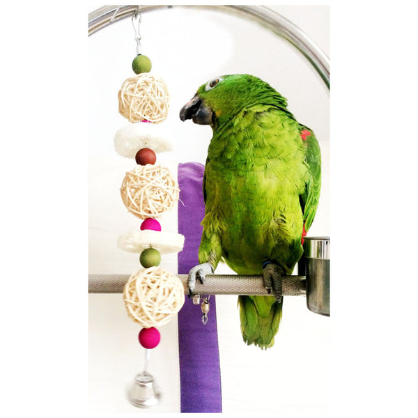 Amazon parrot playing with sponge toy