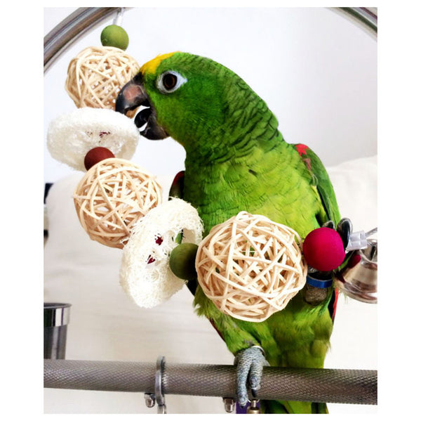 Amazon parrot holding sponge toy