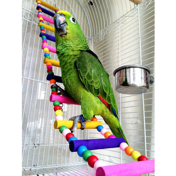 Green parrot on rainbow bridge